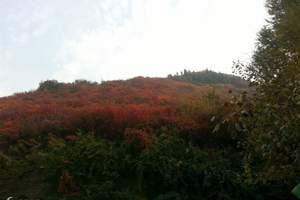 临朐官护山红叶谷风景区