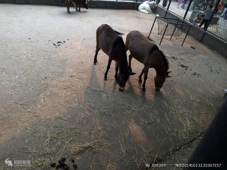 动物园_武汉动物园风景图片