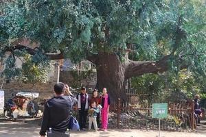 淄博淄川涌泉风景区一日游 马向阳下乡记拍摄基地 淄博旅游团
