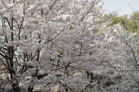 30号宜宾出发【织金洞+安顺平坝樱花纯玩两日游