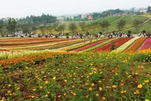 重庆周边赏花的地方 铜梁奇彩梦园 安居古镇一日游 周边一日游