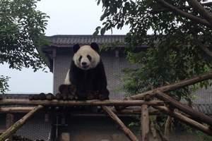 四川自助游攻略_四川成都|乐山|黄龙溪|大熊猫基地双飞6日