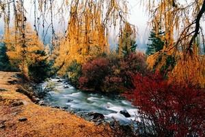 成都去黑水卡龙沟 知木林藏寨羌寨枫叶彩林2日游多少钱 开心游