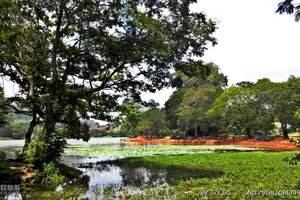 成都出发到斯里兰卡7天5晚_斯里兰卡旅游多少钱_斯里兰卡签证