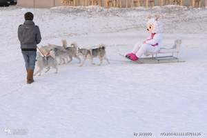 去延庆八达岭滑雪场滑雪一日游、延庆八达岭滑雪一日游冬季报价