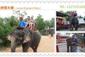 泰国泼水节_郑州去泰国曼谷芭提雅双飞7日游_郑州去泰国旅游