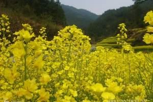 重庆哪些地方可以赏花_潼南看油菜花一日游