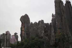 广元到西双版拉4日游旅游多少钱|广元去云南野象谷旅游多少钱