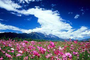 云南哪里好玩_ 扬州到昆明、大理、丽江、西双版纳八日游