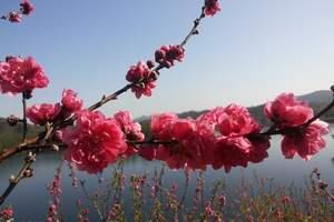 南昆山大观园温泉+桃花节二天游|惠州到龙门旅游