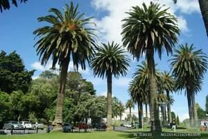 新疆到澳洲|烏魯木齊出發到澳大利亞、新西蘭4飛13日游