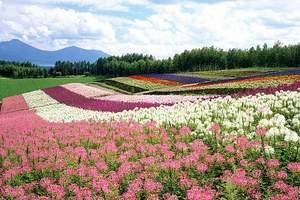 深圳去百里杜鹃旅游线路价格 百里杜鹃赏花时间 双高铁六日游