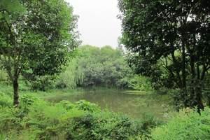 【迷情乌镇】杭州西湖、雷峰塔、夜游乌镇、西塘高铁纯玩3日游