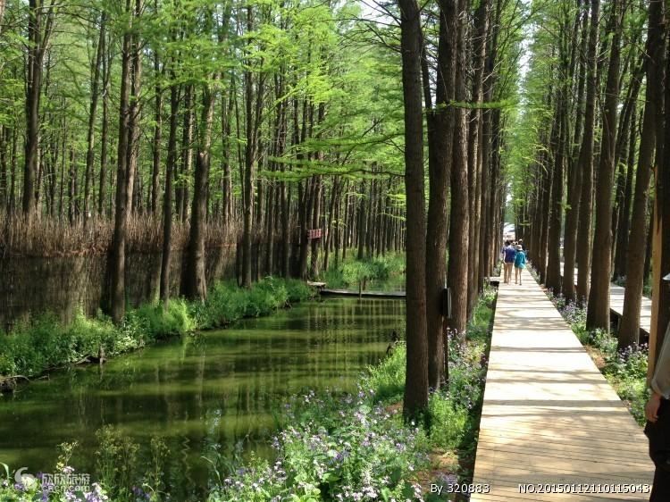 淄博出发 扬州 泰州 溱湖 李中水上森林公园纯玩三日游