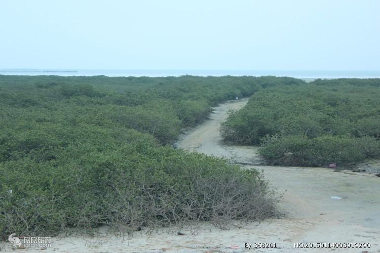 """""""北海金海湾红树林"""">景点介绍:金海湾红树林生态休闲度假旅游区是我国极富滨海湿地风情和渔家文化内涵的黄金景点,整个景区面积约20平方公里,由红树林观光带、金滩和主园区三部份构成。在这里可欣赏群鹜飞天,蓝天碧海,红日白沙的诗意画卷,切身体验到""""落霞与孤鹜齐飞,秋水共长天一色""""的绝美景观。景区内密密匝匝的红树林,宛如一位绿色的仙女飘逸潇洒,在浅绿色的海水中沐浴。涨潮时,只看到她部分婀娜的树冠,饶有""""犹抱琵琶半遮面""""的情趣;退潮时,她那带"""