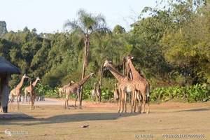 带小孩到广州长隆旅游 长隆动物园+欢乐世界+水上乐园高铁3天
