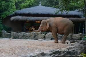 重庆到长隆野生动物园行程报,长隆野生动物园四日游