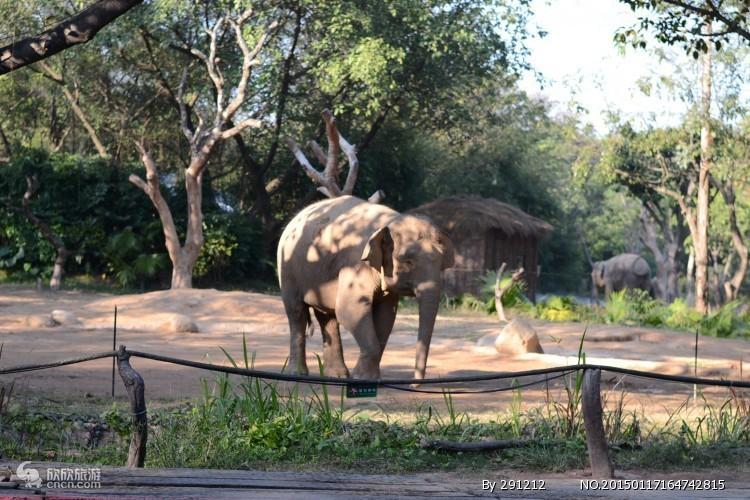 长隆野生动物园图片