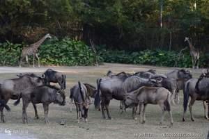 广州旅游、长隆旅游、番禺长隆野生动物世界直通车一天团