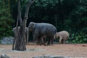 重庆到长隆野生动物园_长隆野生动物园价格_长隆野生动物园3日