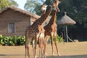惠州到广州长隆野生动物园一日游
