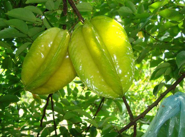 海南有什么热带水果_海南旅游攻略图片