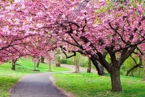 英佛聚龙湾温泉、田野绿世界生态园赏樱花采杨桃、野炊欢乐两日游