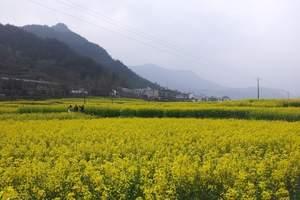 婺源古镇,中国最美乡村,婺源景德镇二日游,油菜花美丽的季节