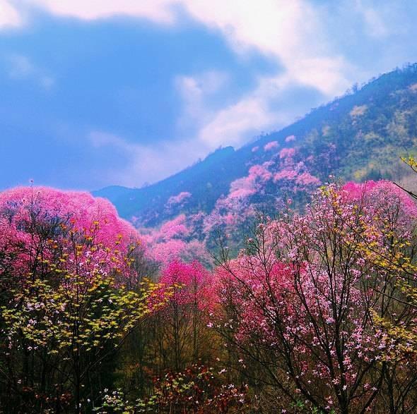 春天紫花开的图片大全大图