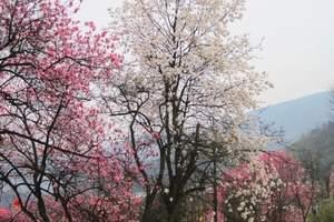 成都去江油药王谷休闲赏花一日游费用 药王谷有什么特色花卉品种