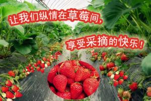 青岛周边采摘游 草莓采摘+多福山玻璃栈+滑道+农家宴一日游