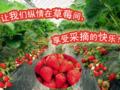 青岛周边游 青岛到红石崖草莓采摘 野生动物园一日游