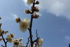 徐州到无锡荣氏梅园、华莱坞5D光影秀、千年古刹寒山寺2日游