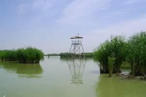 【精品一日游】银川出发到沙湖、影视城、岩画、枸杞园1日游