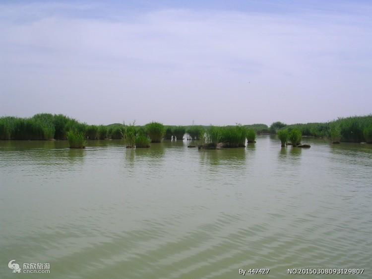 沙湖、镇北堡西部影城、贺兰山岩画、枸杞采摘园一日游