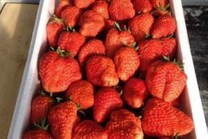 杨城寨草莓采摘团购|杨城寨采摘草莓一日游|沈阳周边采摘园|
