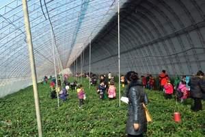 淄博到济南星期八小镇-淄博山水出发到星期八小镇+草莓采摘一日