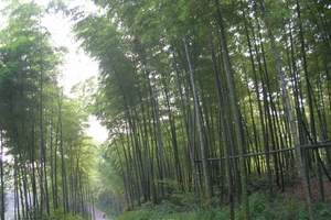 成都、乐山、峨眉山(含金顶)、竹海火车双卧8日纯净游