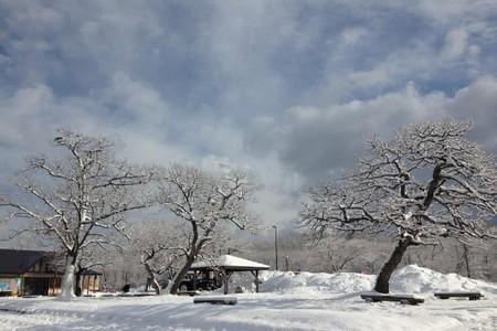 日本旅游、深圳报团去日本旅游、东京、日本本州北海道七天浪漫游