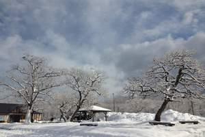 报团去北海道旅游、日本纯北海道魅力雪国温泉美食五天游(五星)