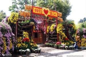 天津到丽江旅游多少钱|天津到昆明跟团游报价|昆大丽三飞六日游