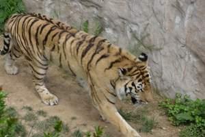西霞口野生动物园优惠门票