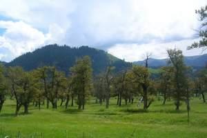新疆伊犁那拉提河谷草原一日游