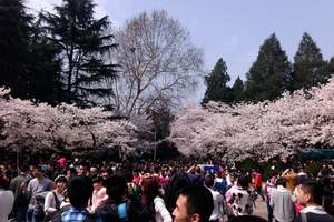 2018年日本樱花旅游6天 2018日本看樱花旅游要多少钱