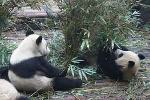 成都六日游--兰州出发去熊猫基地特色线路