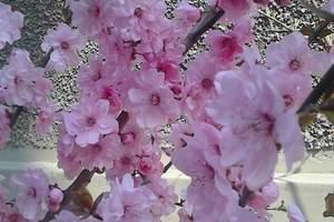 泰安出发去武汉赏樱花尝美食双卧四日游 周末两天旅游推荐线路