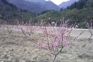 黄山桃花源漂流