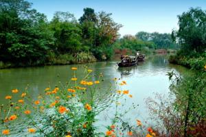 苏州到杭州1日游,西湖游船,花港观鱼,西溪湿地,感受烟雨江南