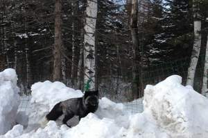 冬天长白山西坡开放吗_长白山西坡雪地摩托_长白山西坡2日有啥