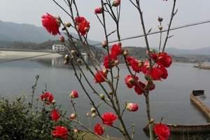 武汉周边一日游 武汉郁金香主题公园、赏郁金香一日游(散客)
